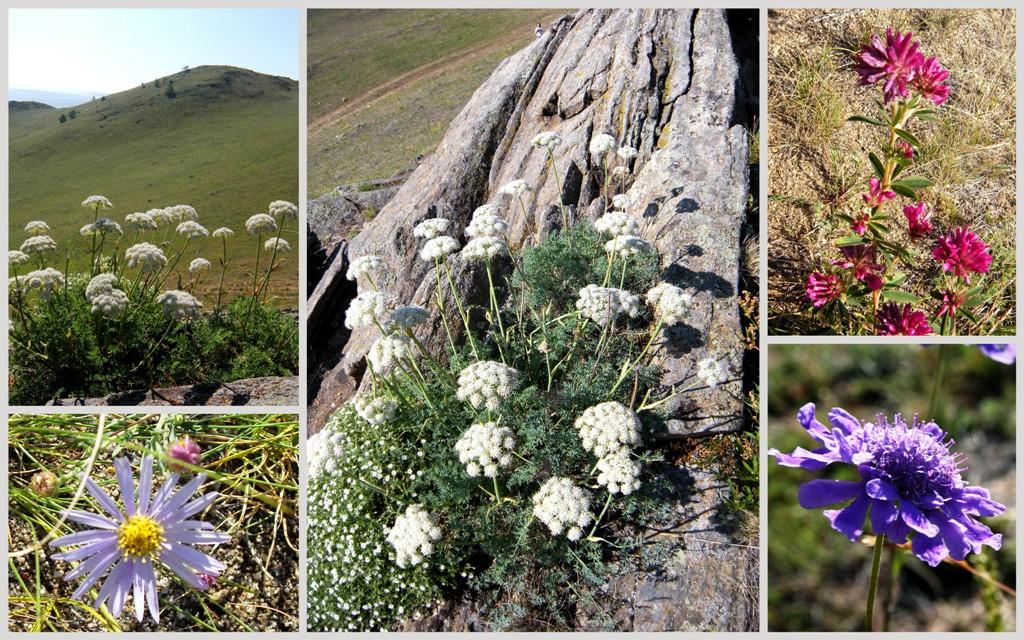 цветы Байкала