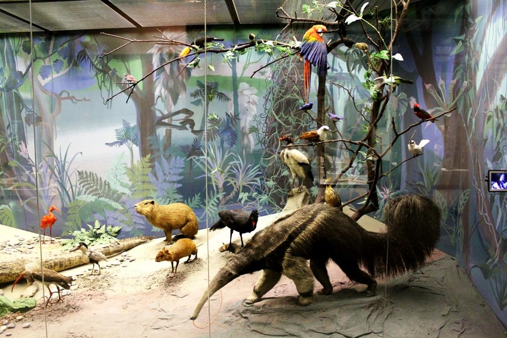 Дарвинский музей