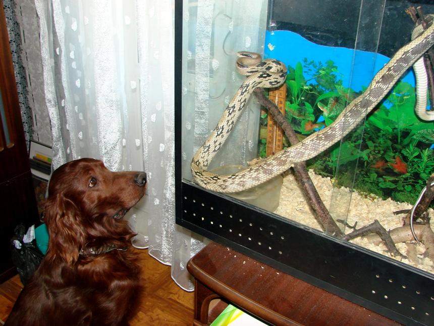 Собака Уллис и змея Гоша Старковых